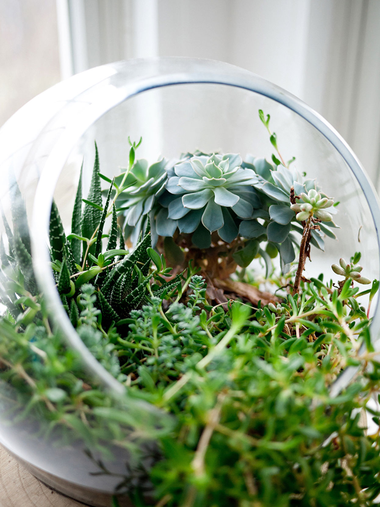 Tiny Gardens Are Perfect Gifts For The Holidays