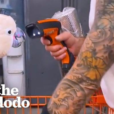 Parrot Loves Going To Home Depot With His Dad | The Dodo Soulmates