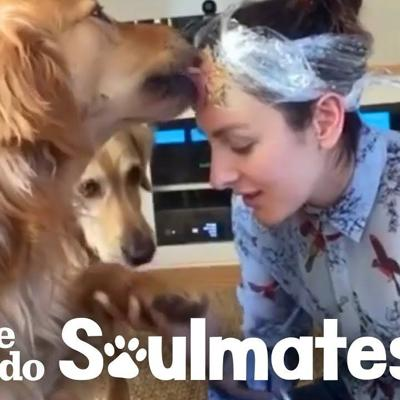 This Woman Put Peanut Butter on Her Head to Trim Her Golden Retriever's Nails | The Dodo Soulmates