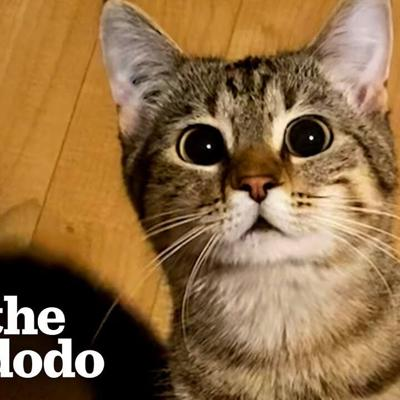 Cute Cat Stands Up Like A Person When She Wants Treats | The Dodo Cat Crazy