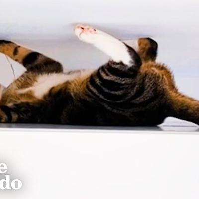This Is The Cat Version Of Spider-Man | The Dodo Cat Crazy