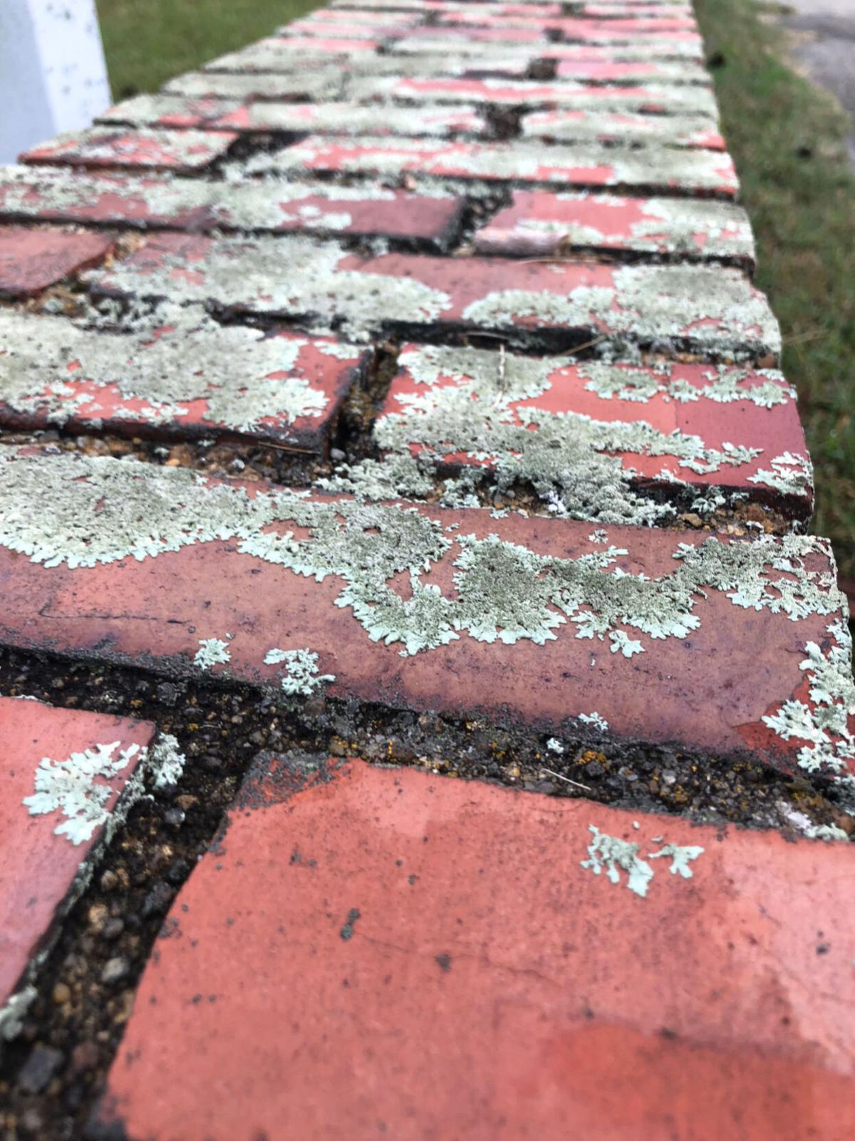 Brick garden wall