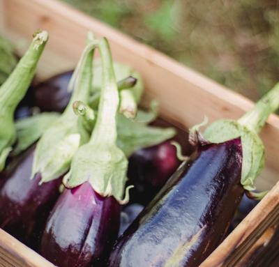 Vegetable Stock