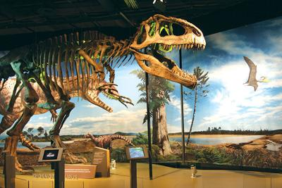 'Ultimate Dinosaurs' Exhibit Brings Rare Breeds to Life at theNAT