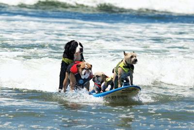 Teaching Dogs New Tricks