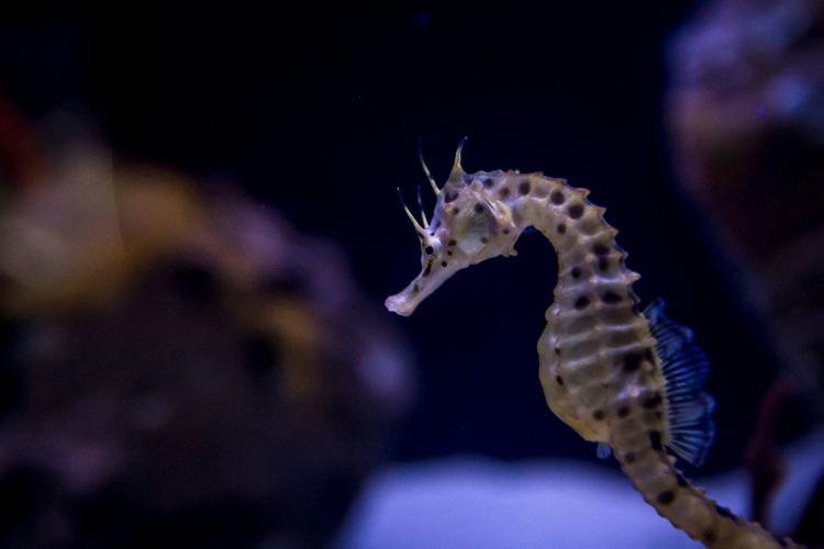 Growing Up Seahorse Behind-the-Scenes Tour
