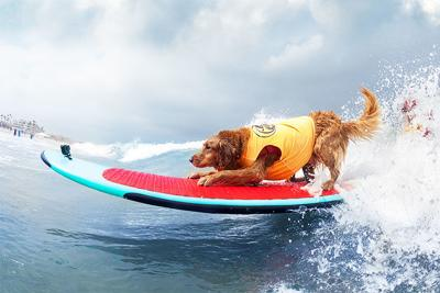 Imperial Beach Surf Dog Competition Returns