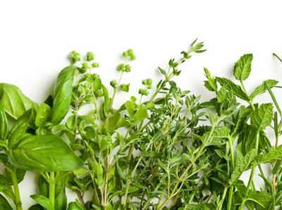 Scripps herbs
