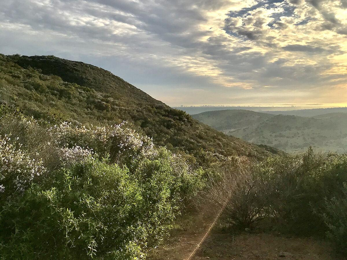 Morning Hikes / North and South Fortuna Trails