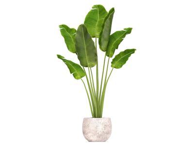Pot This Plant That / Bird of Paradise