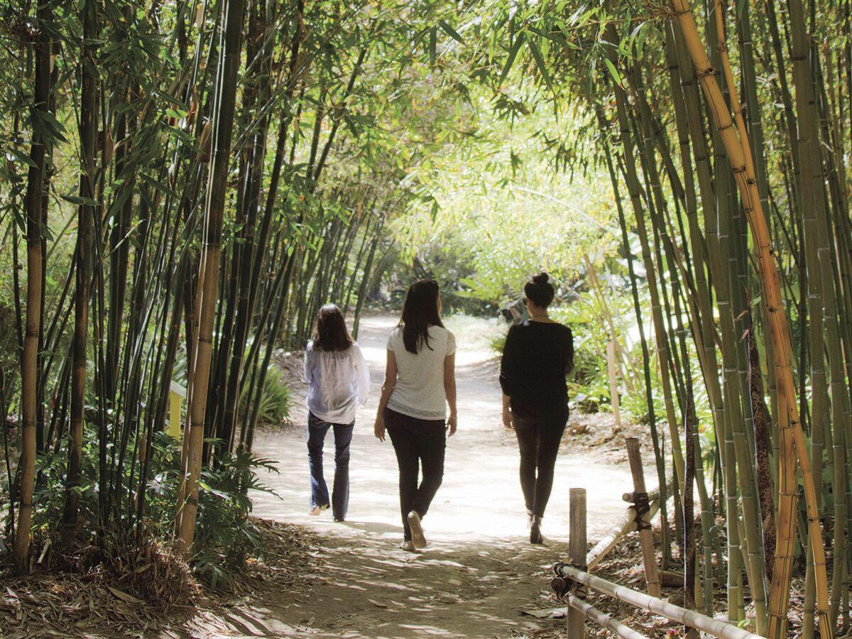 Gardens / San Diego Botanic Garden