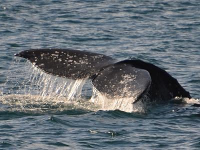 Whale Watching / Hornblower – February 12–18