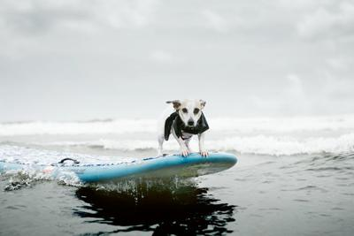 9th Annual Surf Dog Competition