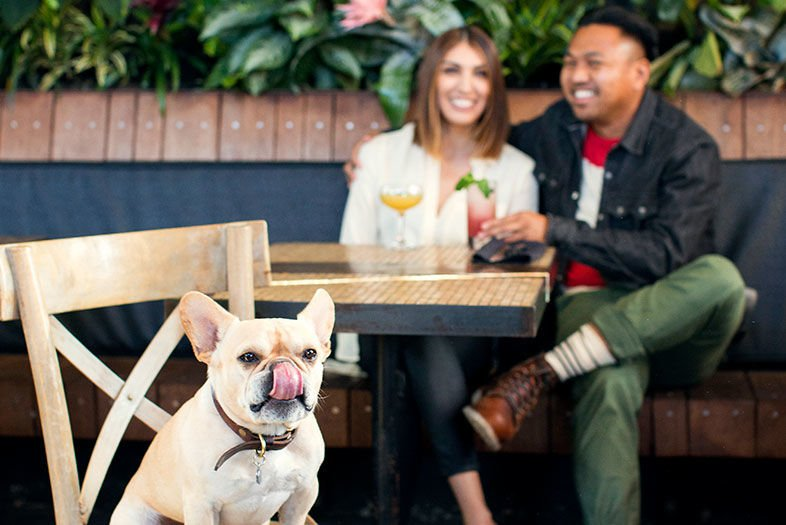 The Dog Lover's Guide to San Diego