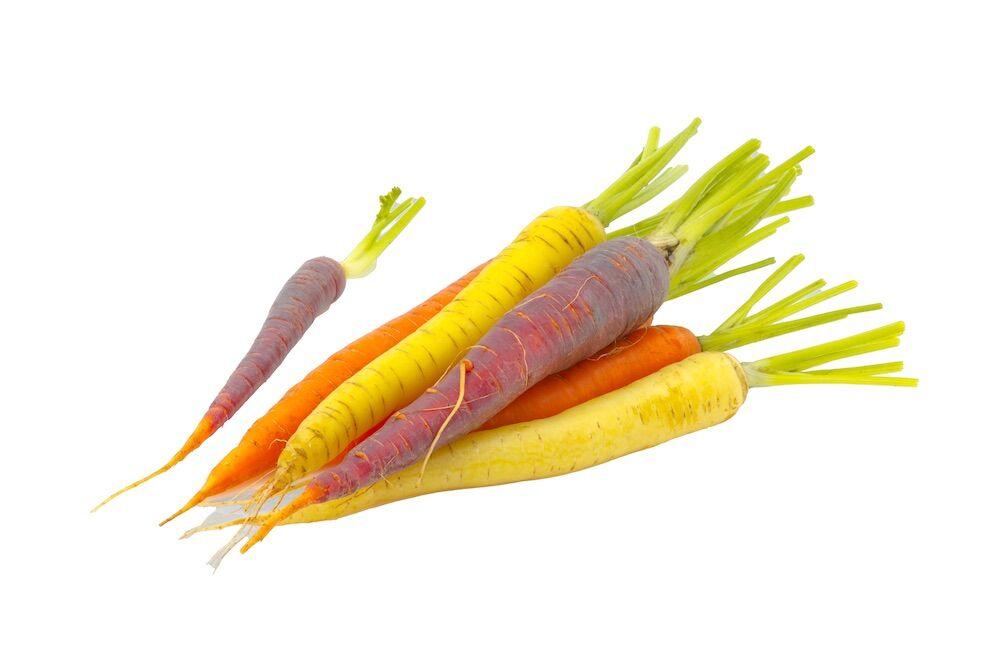 Fall crops - carrots