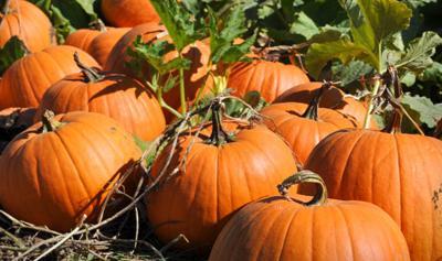 San Diego Pumpkin Patches