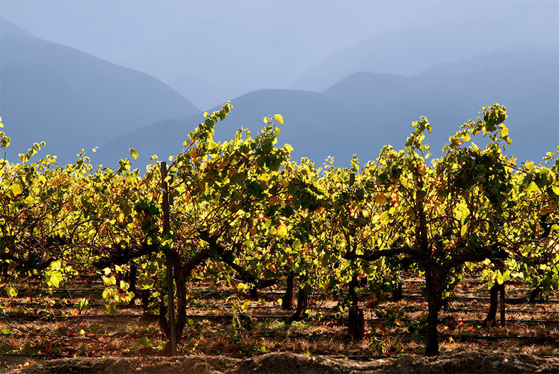 Experience Temecula: Welcome to Wine Country