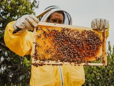 Fairmont Grand Del Mar / Bee Colonies 1