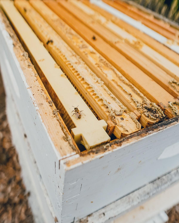 Fairmont Grand Del Mar / Bee Colonies 2