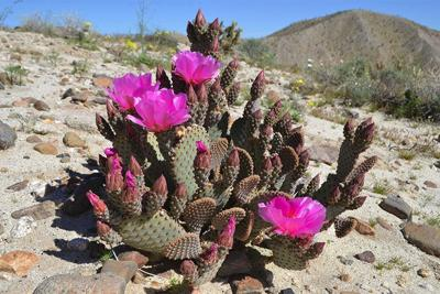 How to Avoid Wildflower Crowds in the Desert This Weekend