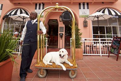 8 Pet-Friendly Staycations in San Diego