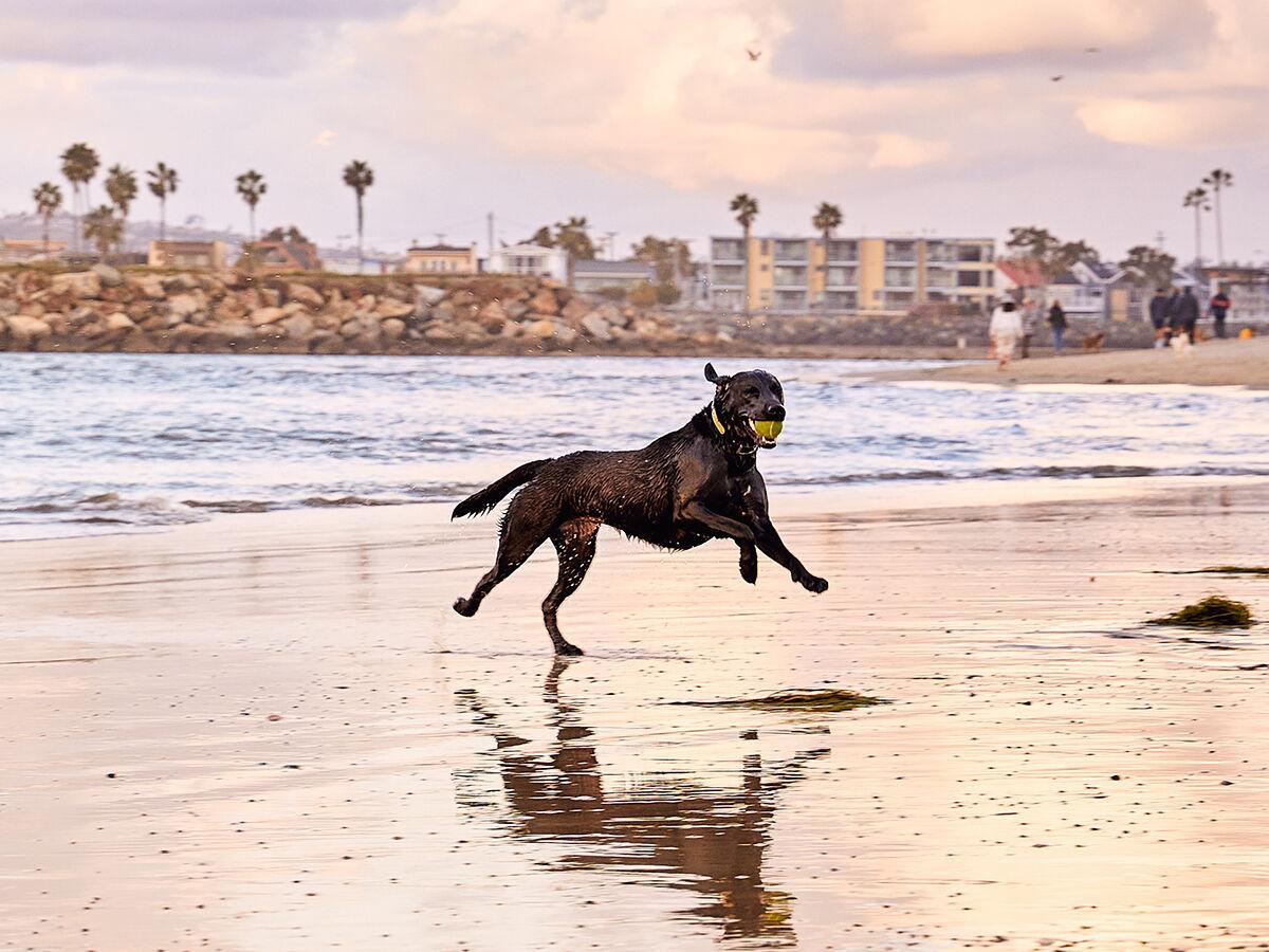 Ocean Beach / OB Dog Beach