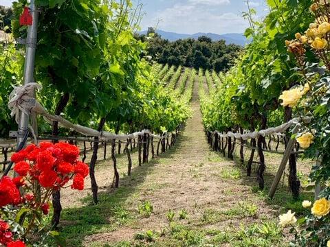 Altipiano Winery