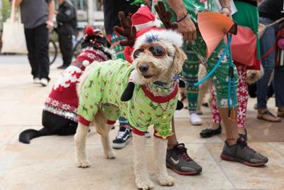 5 Free Things to Do in San Diego This Week: December 14-18