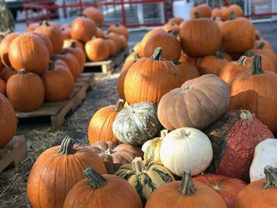 Halloween / Mr. Jack O'Lanterns Pumpkin Patch