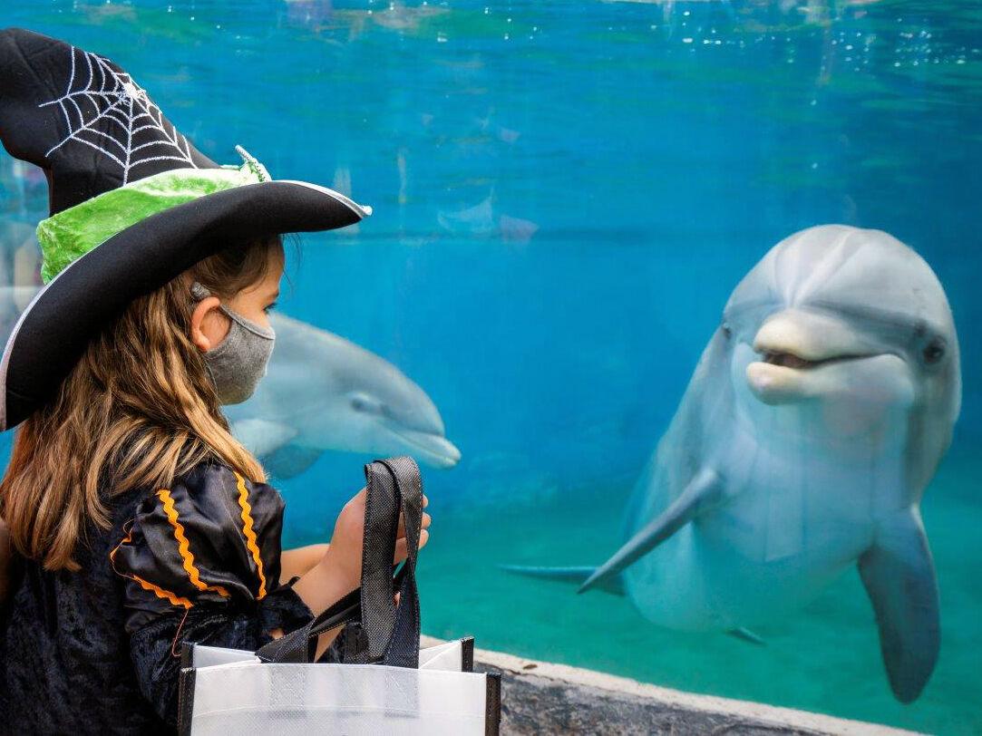 Halloween / SeaWorld Spooktacular