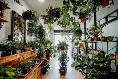 Two New Nurseries Bring High-Style Greenery to San Diego