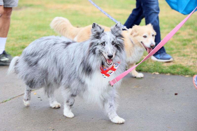 MMGN Walk for Animals