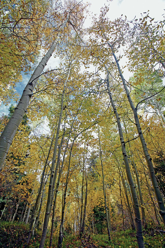 New Mexico's fall colors come shining through