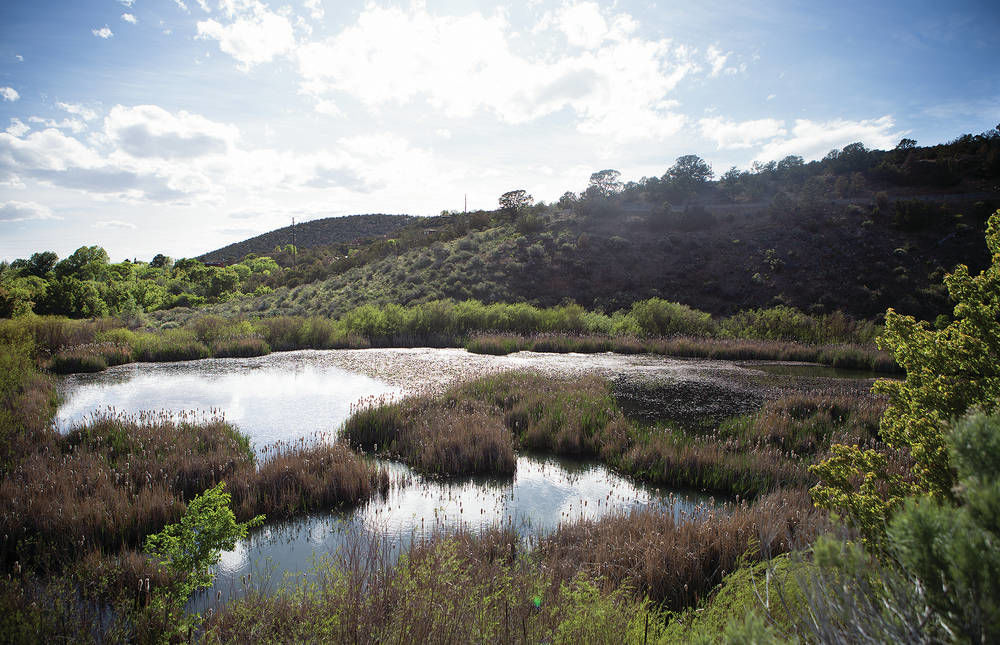 A song of success for frogs in Santa Fe Canyon Preserve
