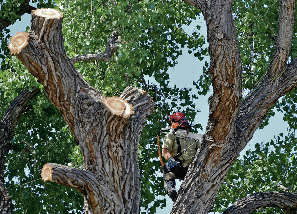 Police: Man detained as Sena Plaza tree begins coming down