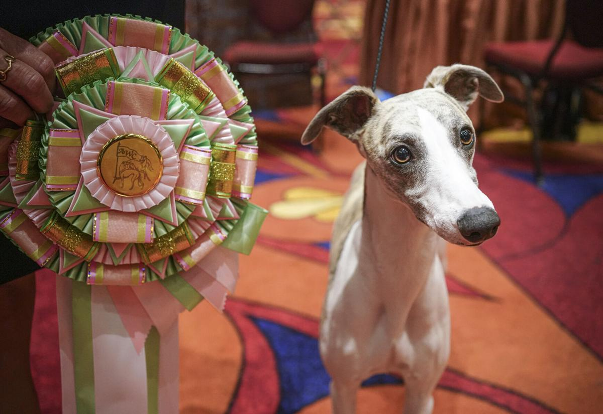 100521_Whippets01-rgbcrop.jpg
