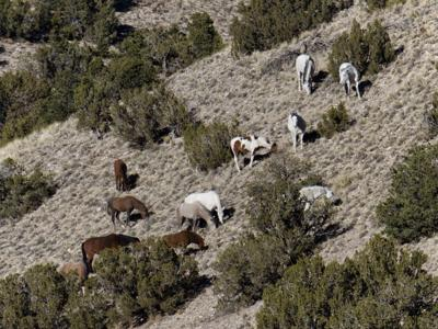Bill would let state remove wild horses from private land