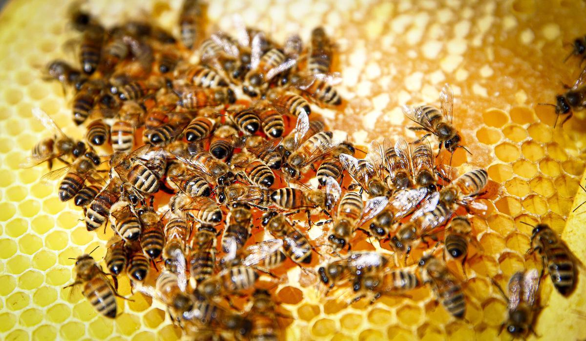 Secondary-030321_Bees001-rgb.jpg