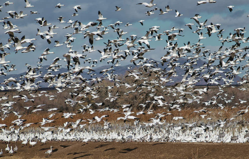 Picture this: Thousands of migratory birds