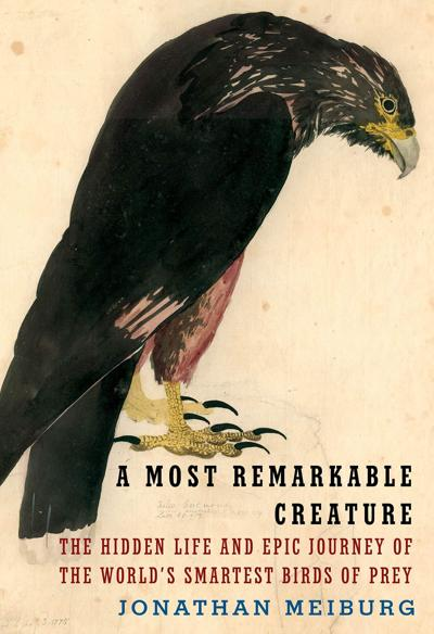 Exploring a particular fascination with a peculiar bird
