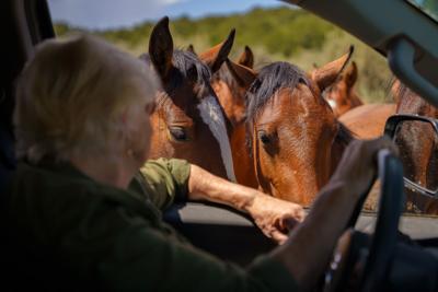 enviro_horses_210902_01.JPG