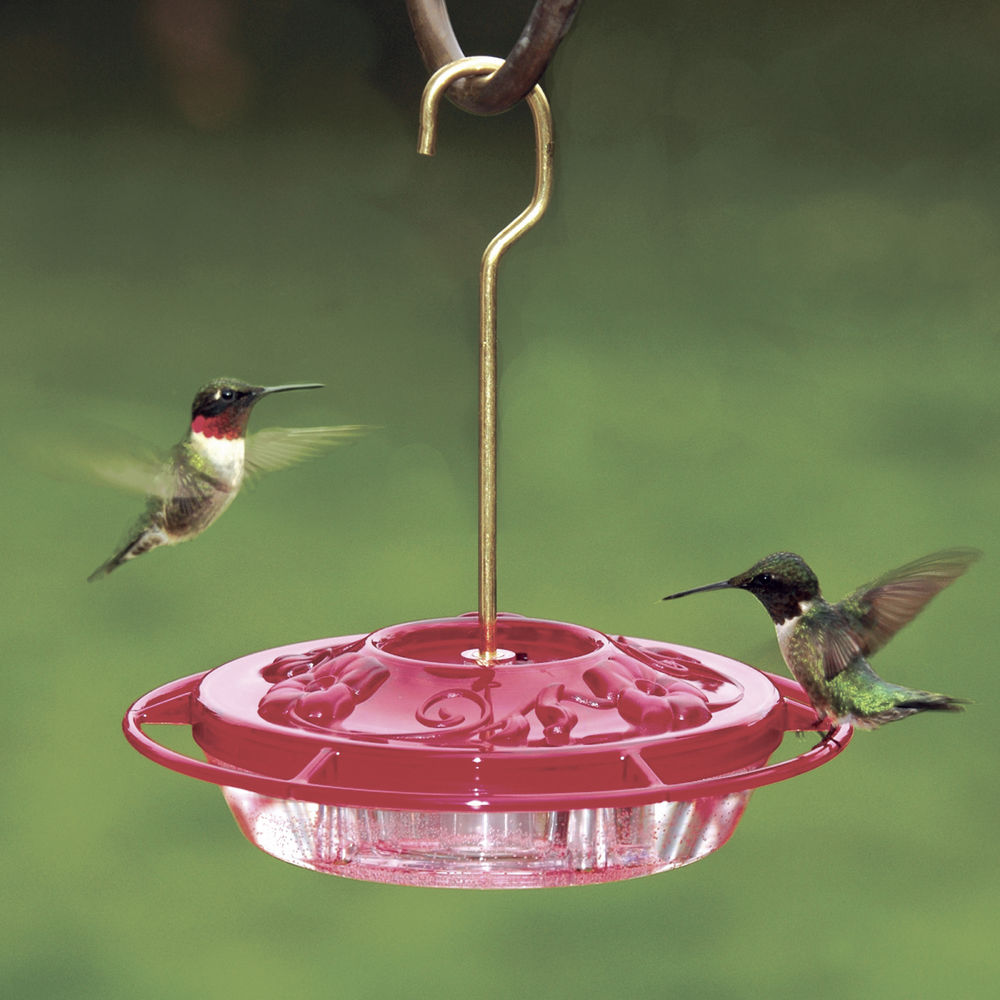Some hummingbirds take break from feeders in June
