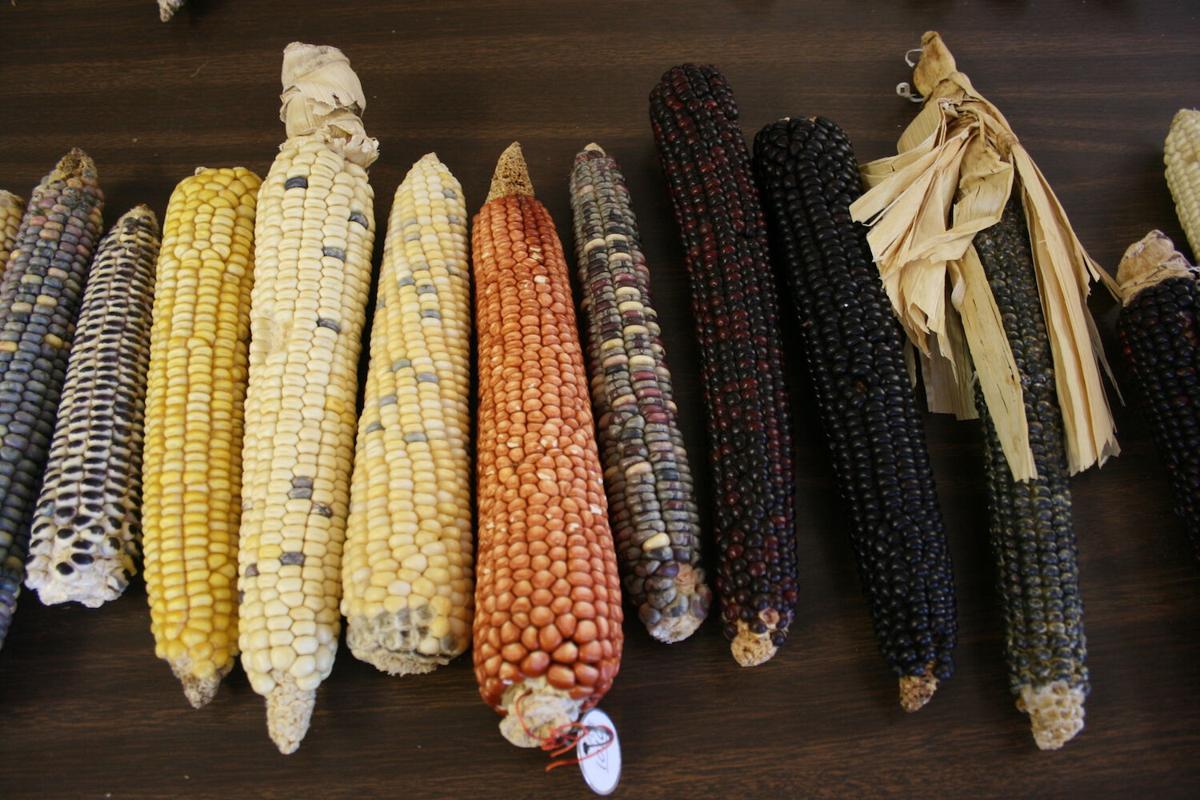 corn varieties.jpg