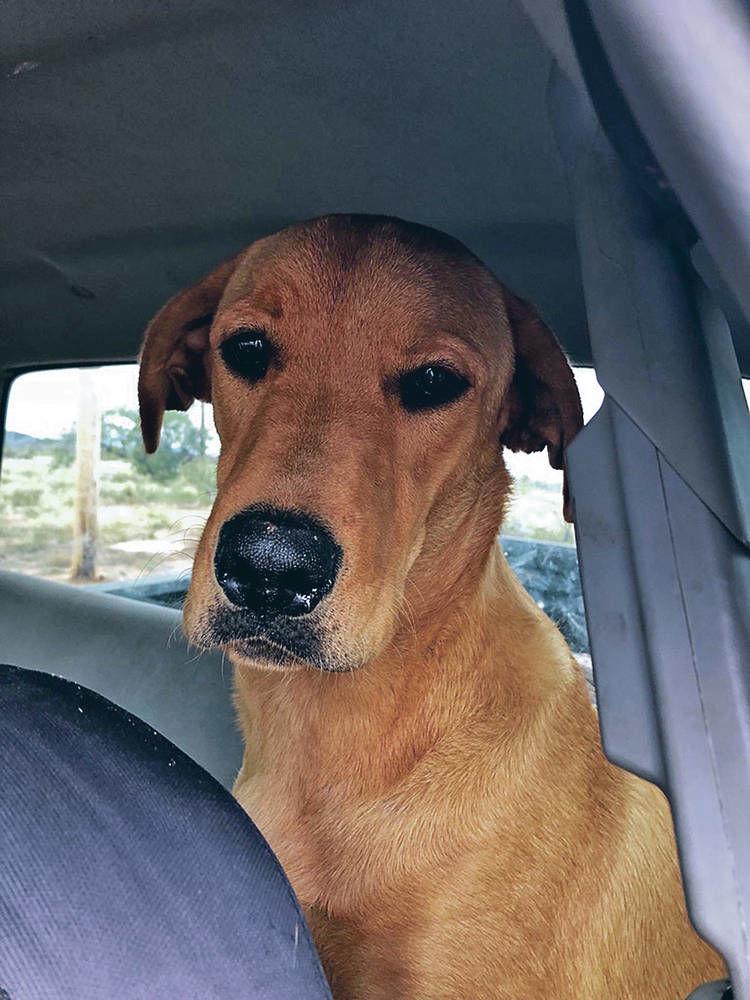 Man shot by best friend — his dog