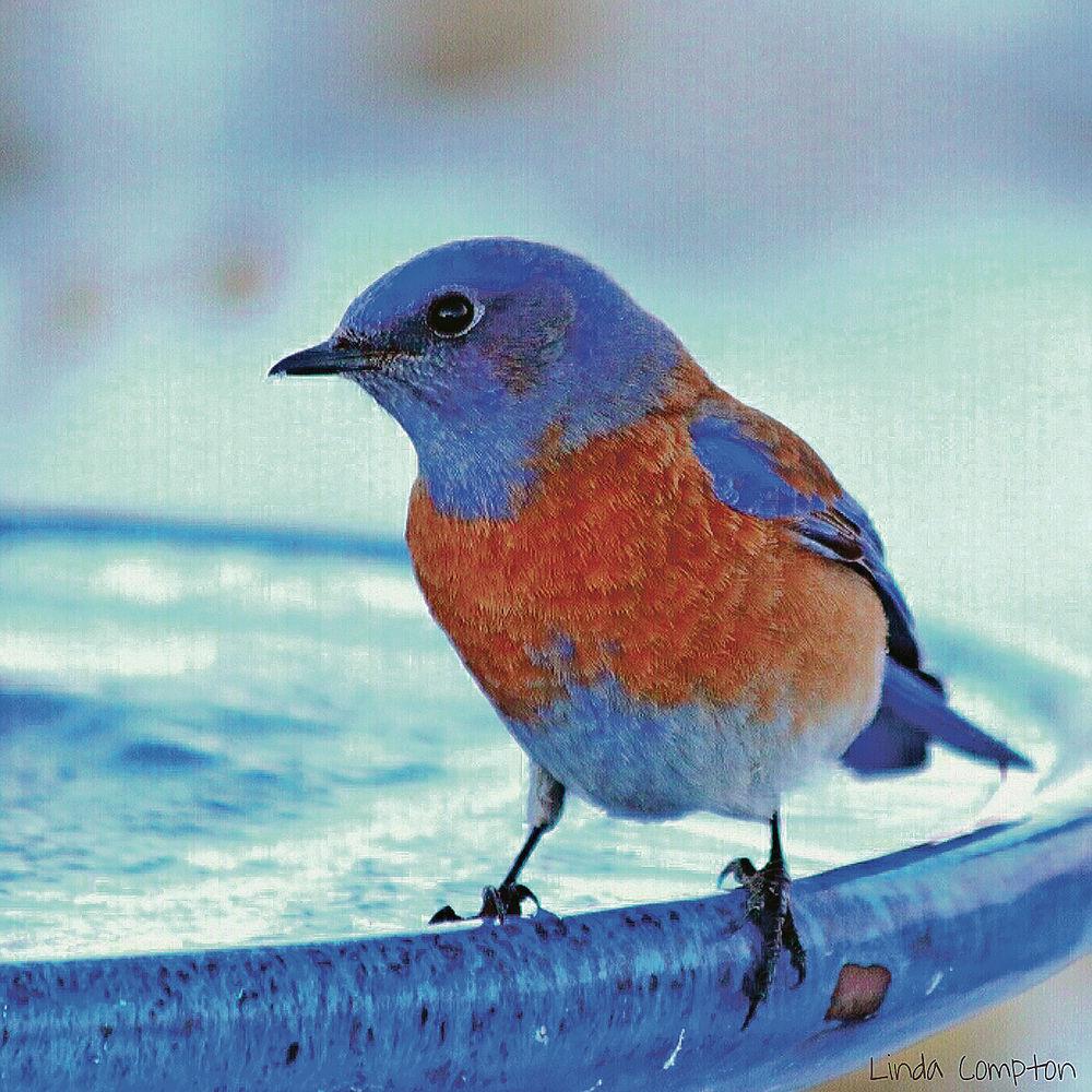 feeding backyard birds especially important as spring approaches