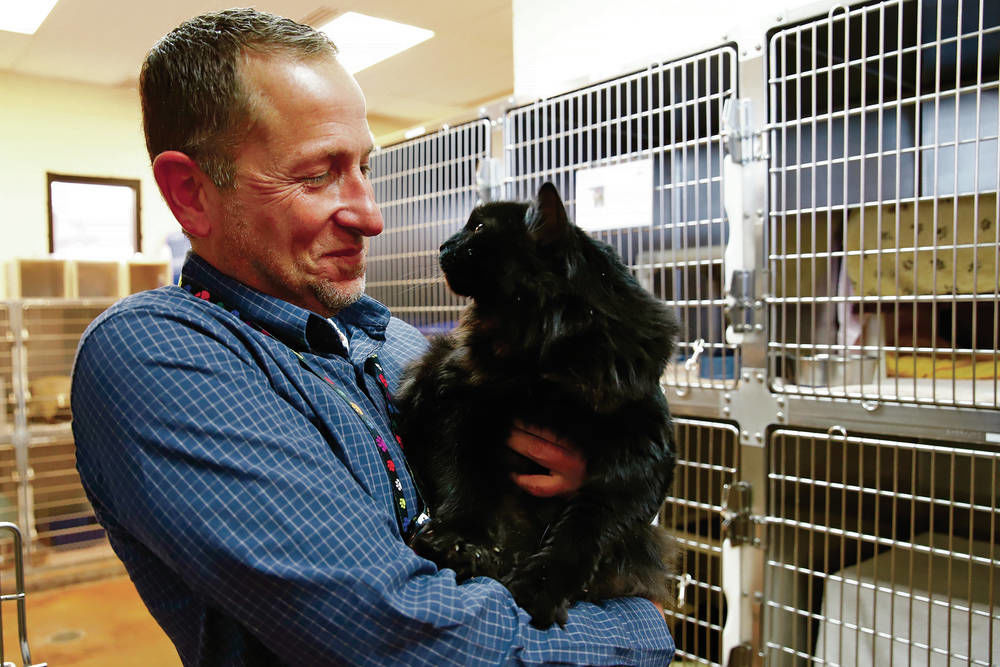 Incredible journey: Cat found in Santa Fe going back to Oregon