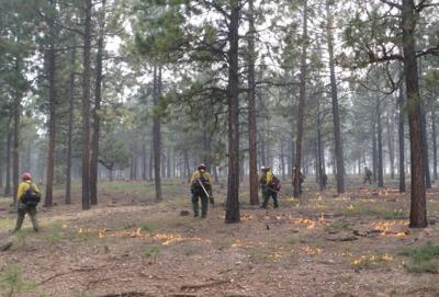 Wrong direction for forest burning policy