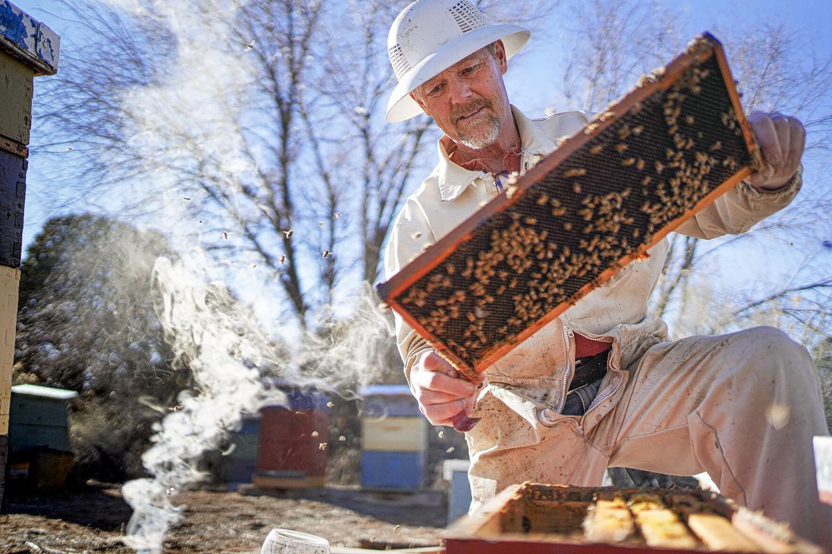 LEDE_030321_Bees003-rgb.jpg