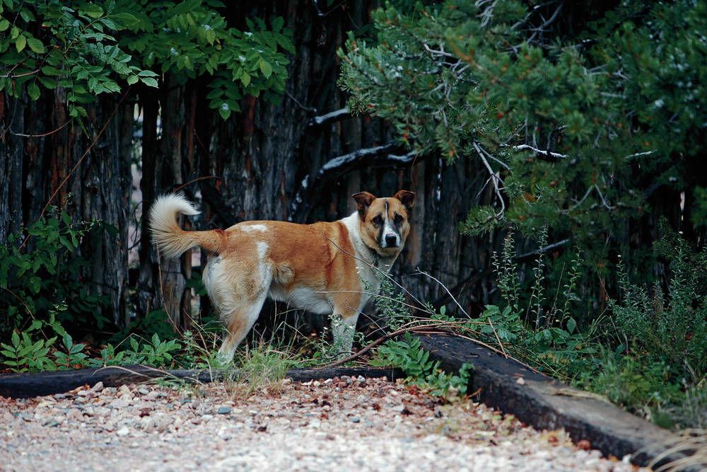 Hunter of Forrest Fenn's treasure is arrested in Santa Fe | Local