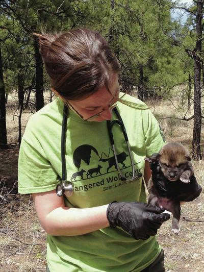 New Mexico seeks to stop feds from releasing wolves